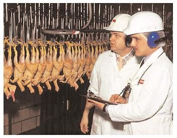 USDA staff working in the Food Safety and Inspection Service inspect more than eight billion birds annually. They ensure that raw meats are processed according to health standards, and help prevent and investigate outbreaks of food-borne illness. [USDA. Reproduced by permission.]