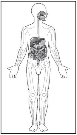 The tract running from the esophagus to the large intestine is called the alimentary canal, and it is where most digestion occurs. As food is pushed through the system, it encounters numerous specialized processes that act on it in different ways, extracting nutrients and rejecting waste. [Illustration by Argosy. The Gale Group.]